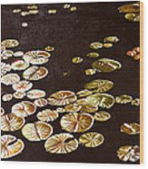 Lake Washington Lily Pad 10 Wood Print