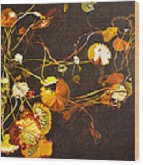 Lake Washington Lily Pad 14 Wood Print