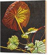 Lake Washington Lily Pad 18 Wood Print