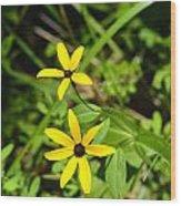 Lake Winfield Scott Wild Black-eyed Susan Flowers Wood Print