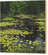 Lake With Lily Pads Wood Print