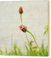 Lake's Flower Wood Print