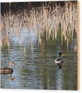 Lakeside - Mallard Wood Print