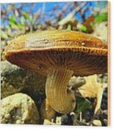 Lakeside Mushroom  Wood Print