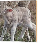Lamb Babe Wood Print