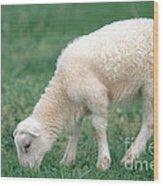 Lamb Wood Print