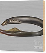Lamprey Eel, Illustration Wood Print