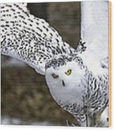 Landing Of The Snowy Owl Where Are You Harry Potter Wood Print