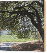 Landscape At The Jack London Ranch In The Sonoma California Wine Country 5d24583 Wood Print