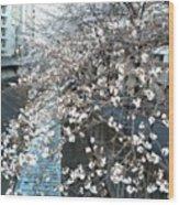 #landscape #cherryblossom Wood Print