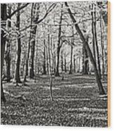 Landscape In The Woods Wood Print