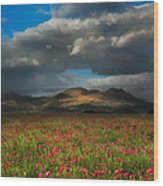 Landscape Of Poppy Fields In Front Of Mountain Range With Dramat Wood Print
