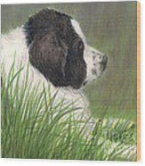 Landseer Newfoundland Dog In Grass Pets Animal Art Wood Print