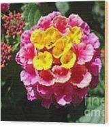 Lantana Blooms And Buds Wood Print