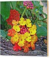 Lantana Flowers 2 Wood Print