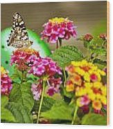 Lantana With Butterfly Wood Print