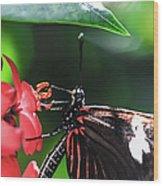 Laparus Doris Butterfly Wood Print