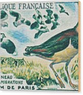Lapwings Study Of Migration Museum Of Paris Wood Print