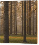 Larch Grove Wood Print by Anne Gilbert