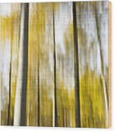 Larch In Abstract Wood Print