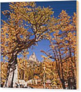 Larch Trees Frame Prusik Peak Wood Print