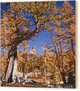 Larches Frame Prusik Peak Wood Print