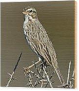 Large-billed Savannah Sparrow Wood Print