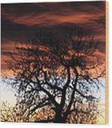 Large Cottonwood At Sunset Wood Print