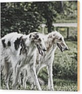 Large Dogs On The Prowl Wood Print