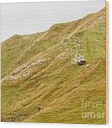 Large Flock Of Herded Sheep On A Steep Hillside Wood Print