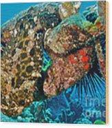 Large Frogfish Wood Print