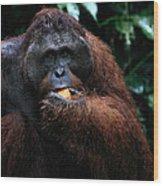 Large Male Orangutan Borneo Wood Print
