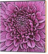 Large Pink Dahlia 2 Wood Print