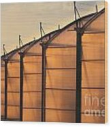 Large Scale Industrial Greenhouse Lit By Sunet Wood Print