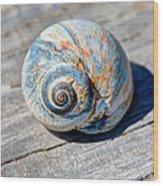 Large Snail Shell Wood Print