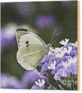 Large White Pieris Brassicae  Wood Print