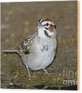 Lark Sparrow Wood Print