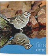 Lark Sparrow Chondestes Grammacus Wood Print