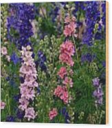 Larkspur    Delphinium Consolida Wood Print