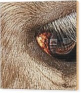 Lashes Wood Print by Diana Angstadt