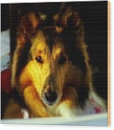 Lassie Come Home Wood Print