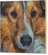 Lassie - Rough Collie Wood Print
