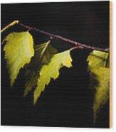 Last Autumn Gifts Wood Print