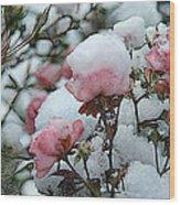 Last Bloom Of Summer Wood Print