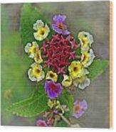 Last Blooms Number Two Wood Print