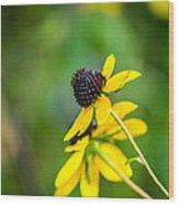 Last Blooms Of Summer Wood Print