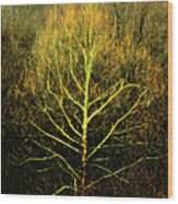 Last Breath Of Fall Wood Print