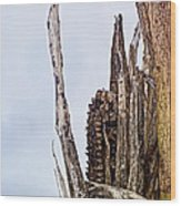 Last Of The Corn Wood Print