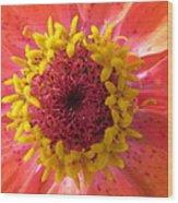 Last Orange Bloom Wood Print