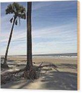 Last Pine Standing Wood Print